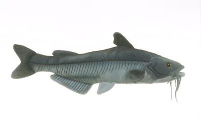 10 blue catfish fish plush stuffed animal