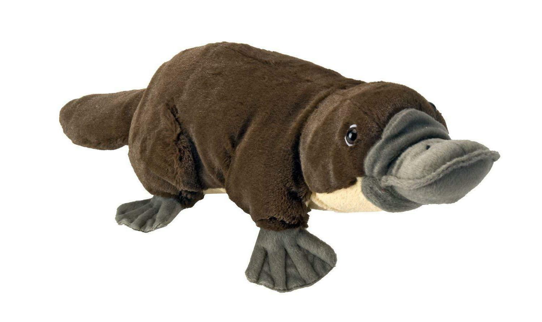 12 platypus plush cuddlekins stuffed animal plush