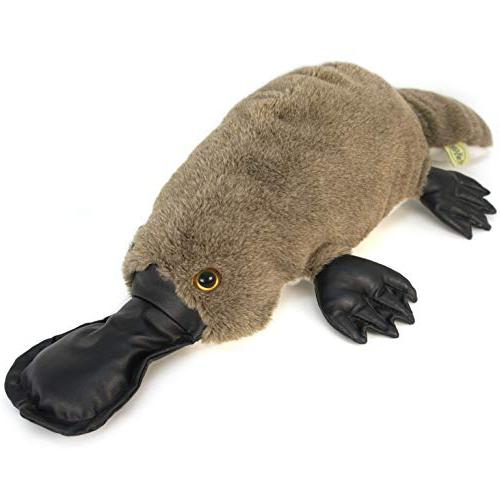 Patty the Platypus | Almost Large Duck-Billed Platypus Animal By Tale