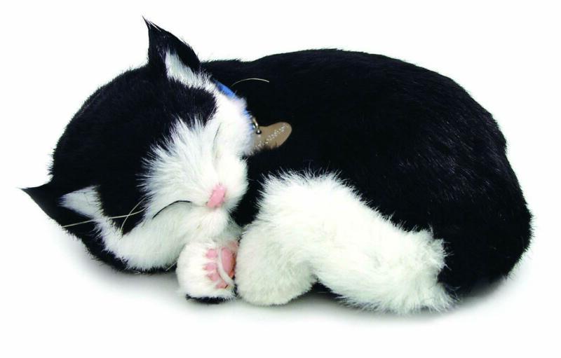 perfect petzzz black and white shorthair kitten