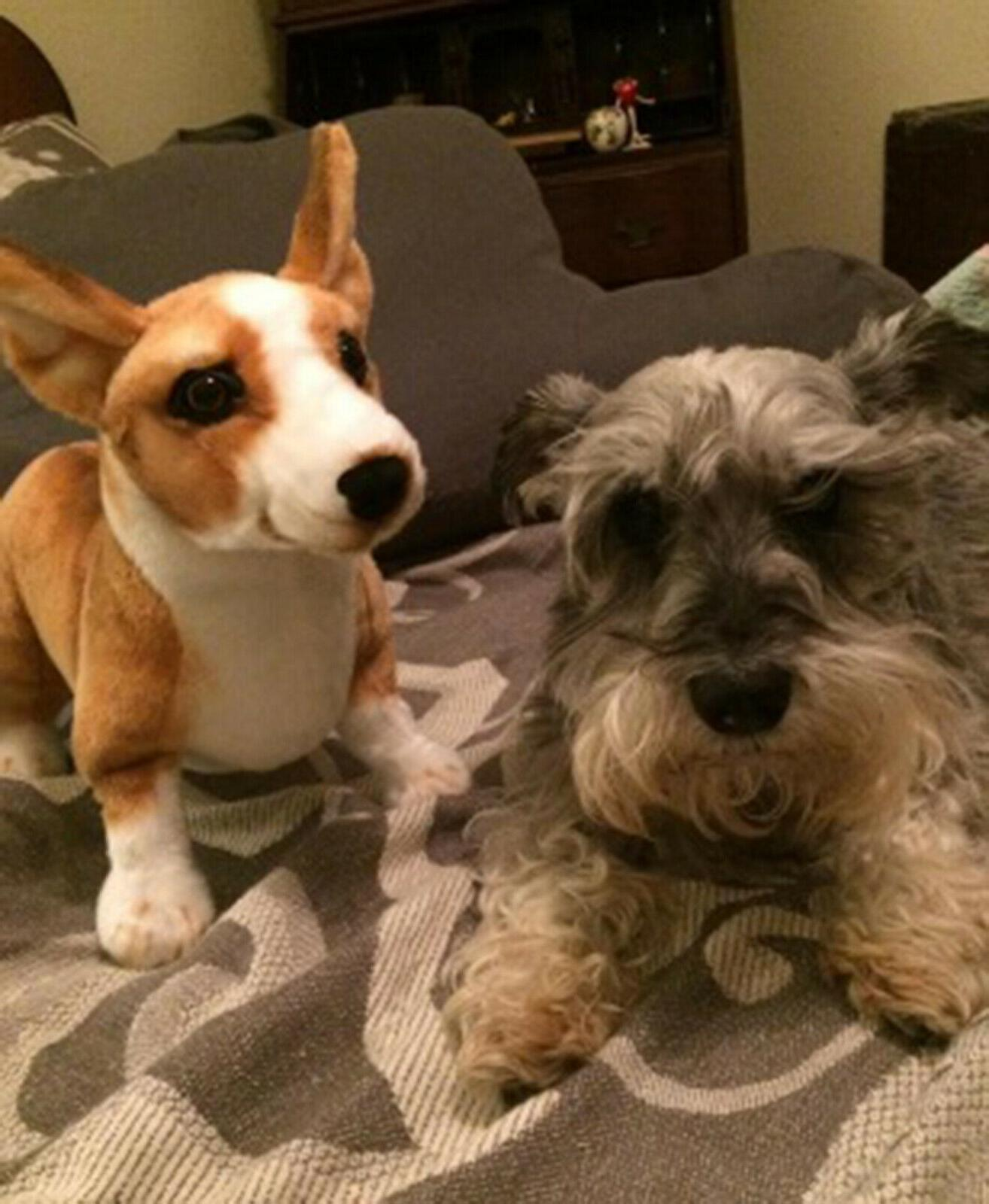 Realistic Dog Plush, Kids Stuffed Animal Toy Gift
