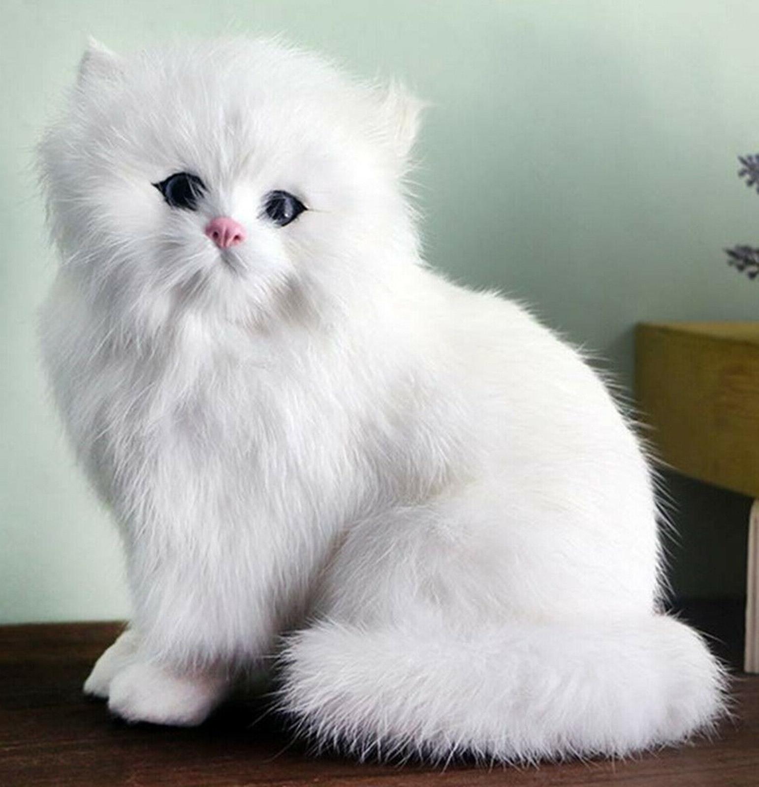 Realistic Persian Pet Plush, Kids And Stuffed Gift