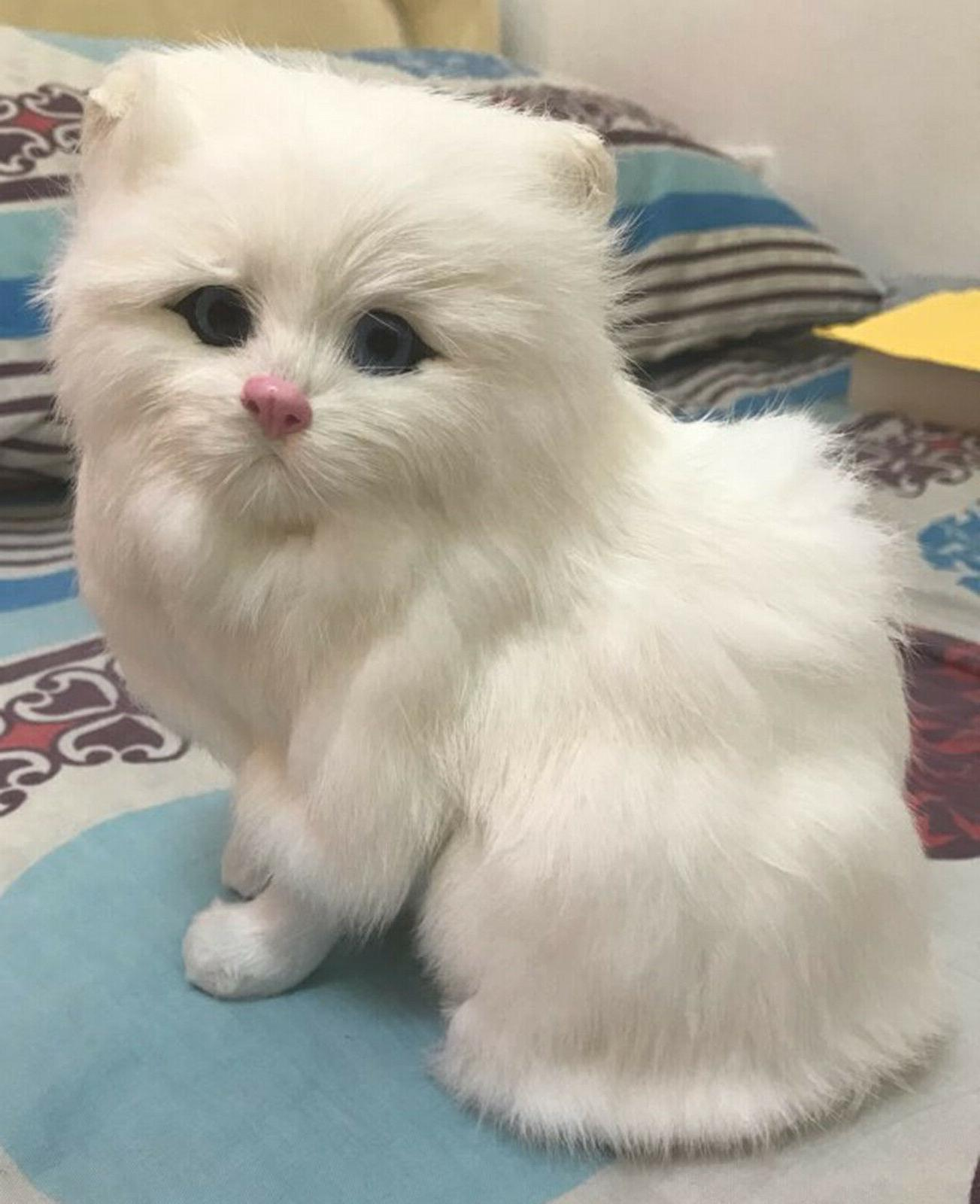 Realistic Persian Cat Plush, Children Stuffed Animal