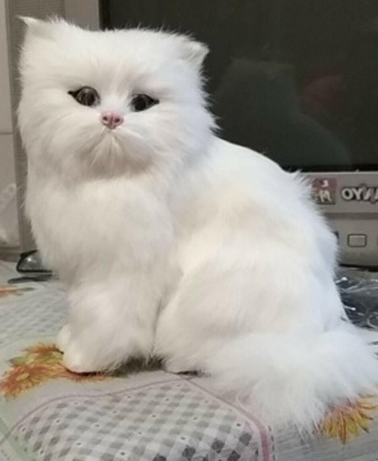 Realistic Pet Plush, Kids Stuffed Gift