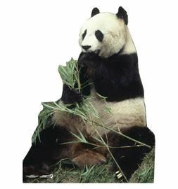 Panda Bear Cardboard Cutout